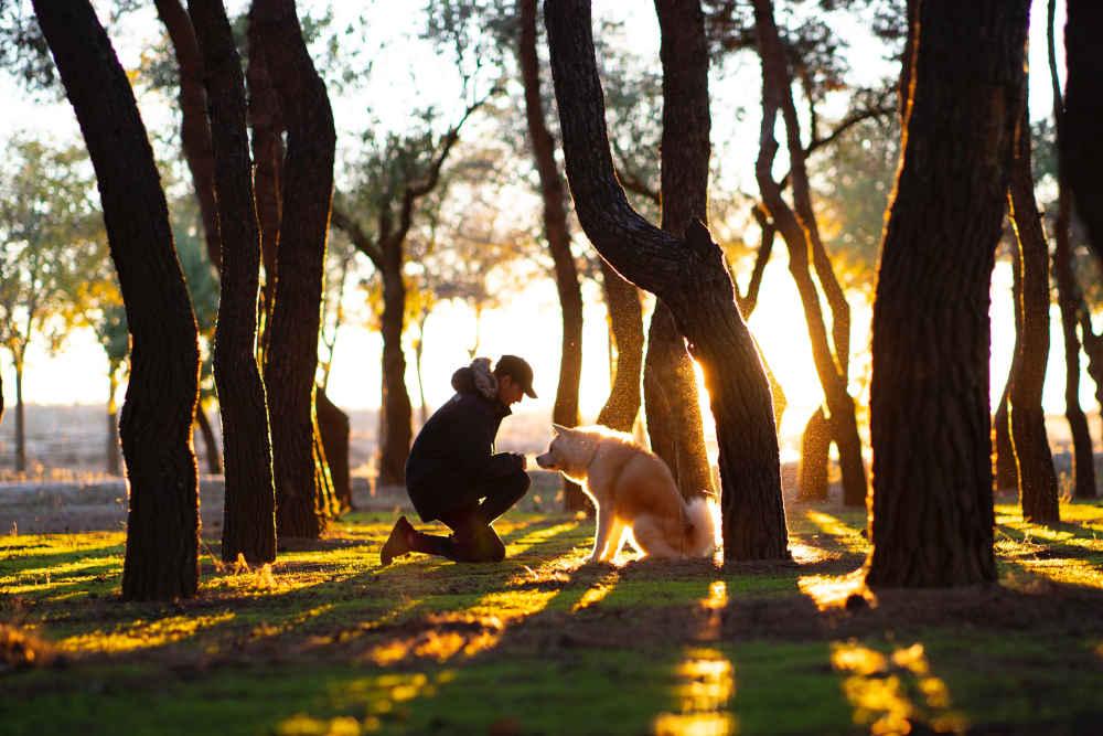 Top Ten Reasons to Pet Sit