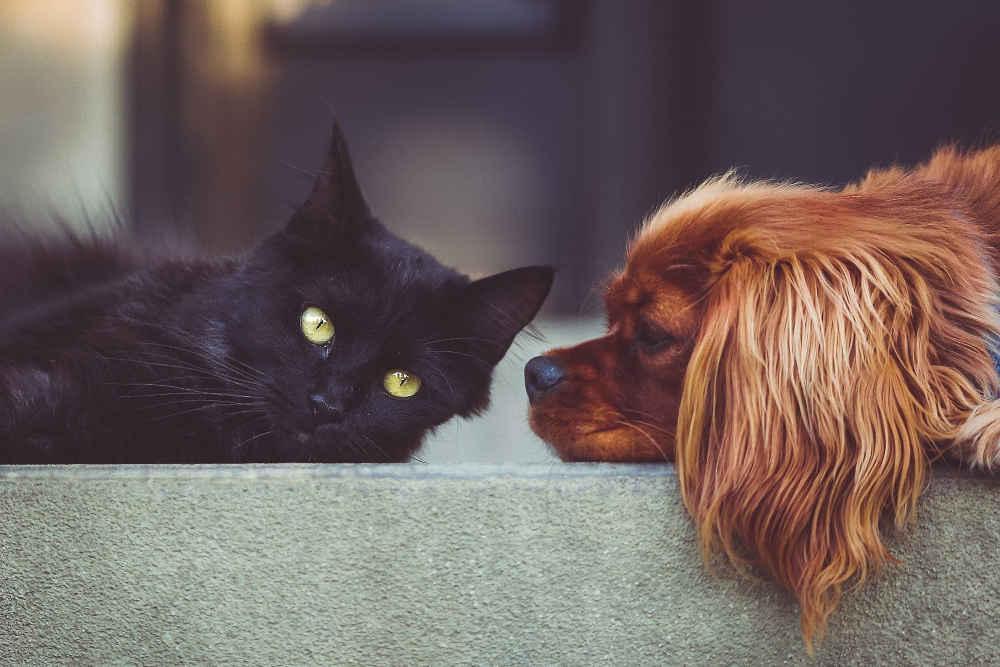 Pet Sitting Azerbaijan
