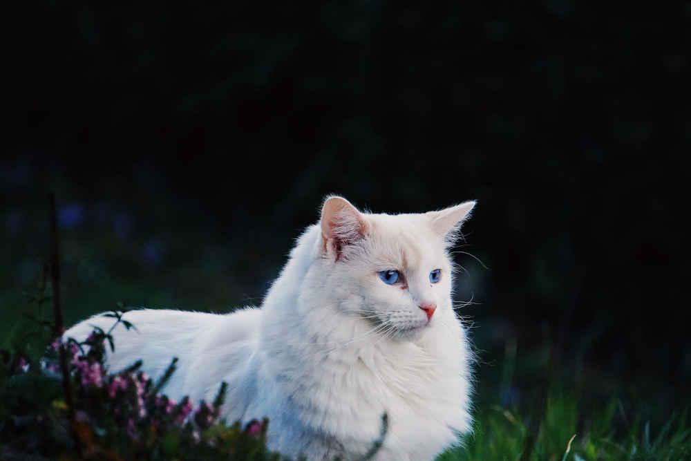 Pet Sitting in Fier Cifci